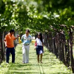 Private Wine Tours