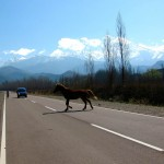 Driving in Mendoza